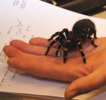 brook-spider1-web
