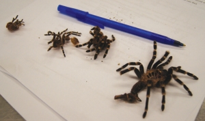 brook-spider5-web