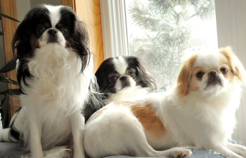 DeBruzzi dogs