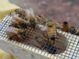 bees5-web